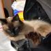Thumbnail for Handbag and Coat Pocket Hazards